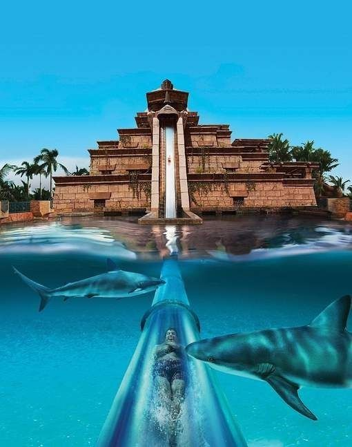 Leap of faith slide in atlantis bahamas travel for Atlantis piscine