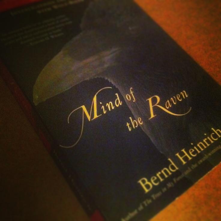#reading #research #ravens #corvus #ravneringene