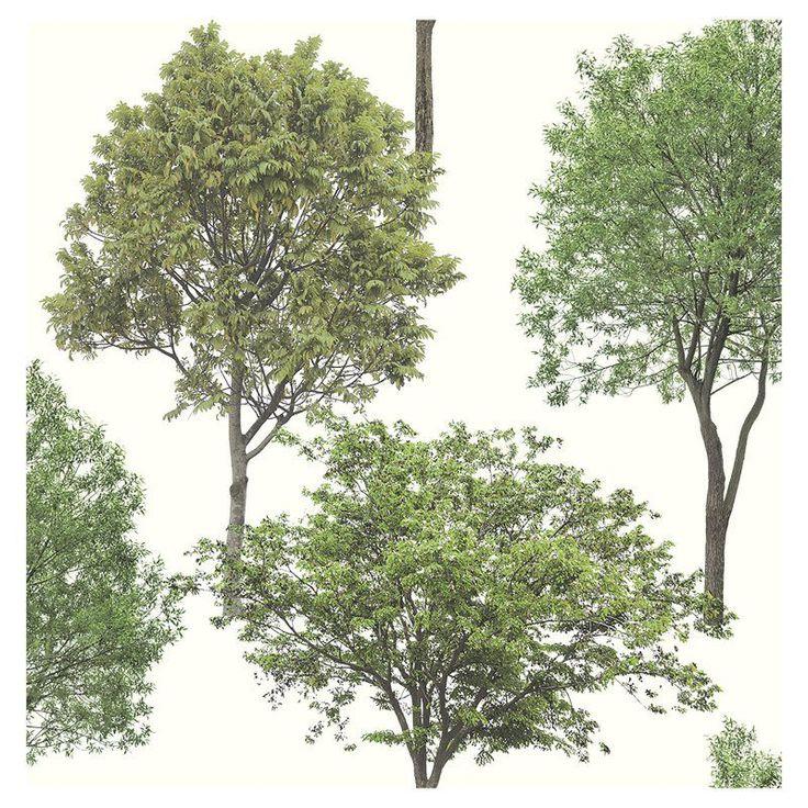 Brewster Tree Tops Photographic Tree Wallpaper Green - FD23278