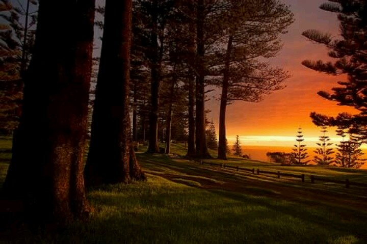 norfolk island singles Take an 8 day norfolk island discovery tour exploring all norfolk island has to offer taking you on a journey from past history to modern day living.