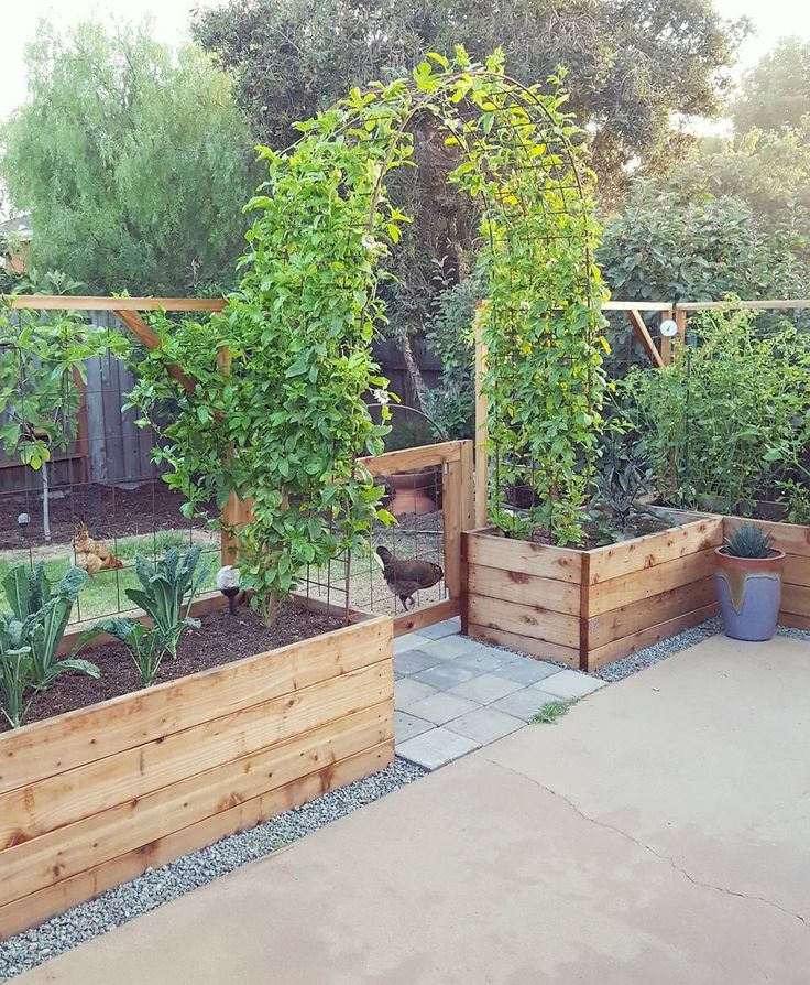 The current state of the patio garden: a sight for sore eyes; a sight we've been waiting on since first dreaming up the #backyardgardenreno... the passionfruit vines filled in and have finally met one another on top of the arch! Now they just need to fill up with fruit, for kombucha of course And check out those 4' tall tomatillos on the right ✊ #gardenvinestrellis