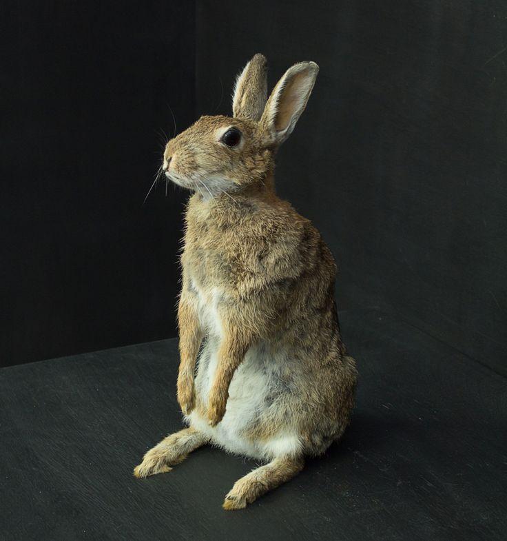 Peter Rabbit Vintage Industries