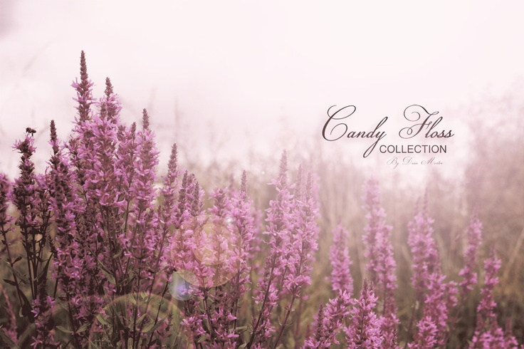 "A preview image from my new ""Candy Floss Collection"" For latest updates please like my Facebook page at www.facebook.com/photographydmp"