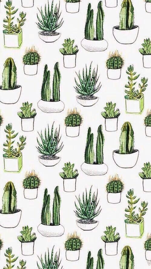 wallpaper, cactus, and plants resmi