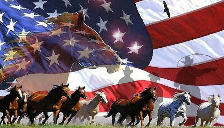 26 Best Patriotic Horse Decals From Diamondsign Com Images