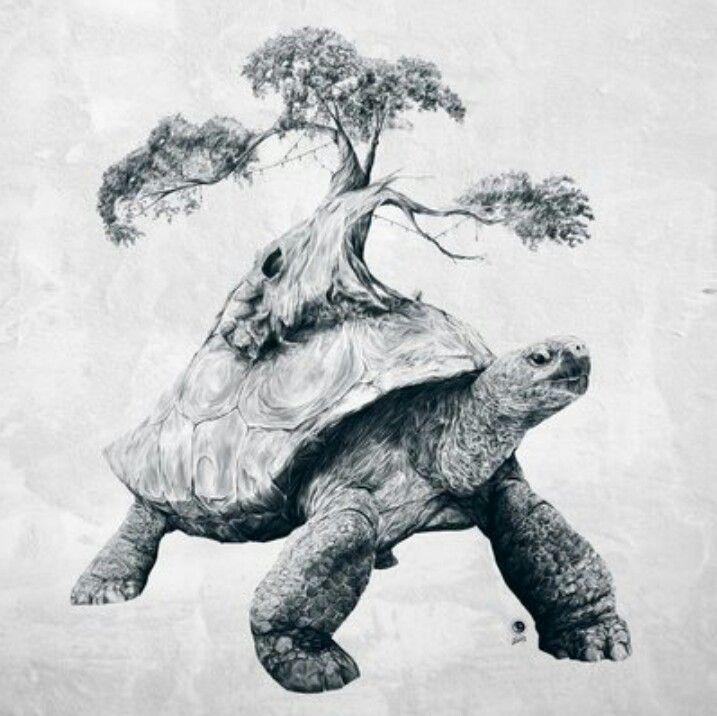 tortoise drawing for pinterest - photo #19