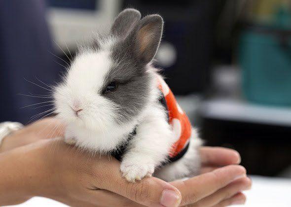 Elegir el conejo adecuado para ti y tu familia