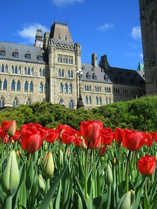 Canadian Parliament Building, There is a tulip festival each year at this time - tulip bulbs donated by the Dutch government because a Dutch princess was born in Ottawa.