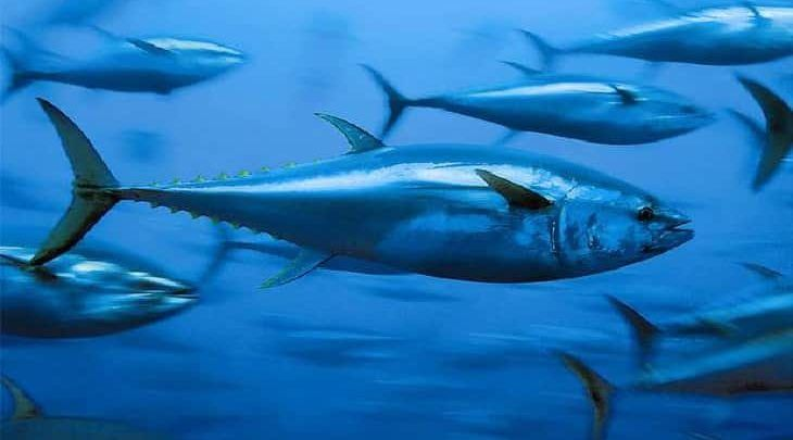 تفسير حلم السمك الحي في منام العزباء والمتزوجة والحامل Whale Animals