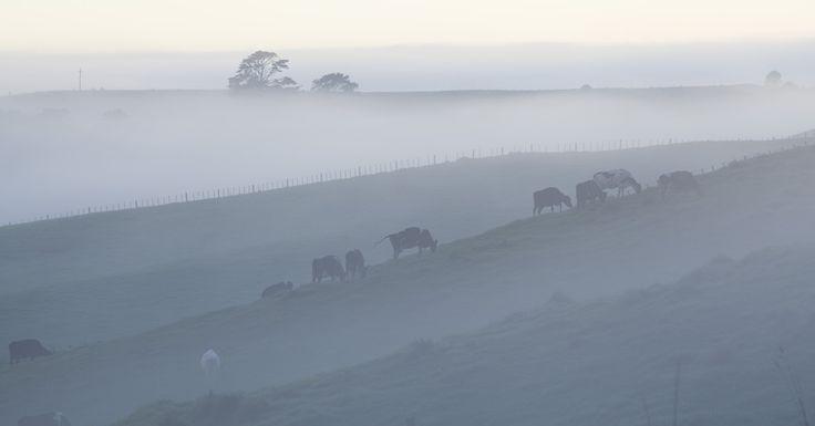 morning fog by jong beom kim on 500px