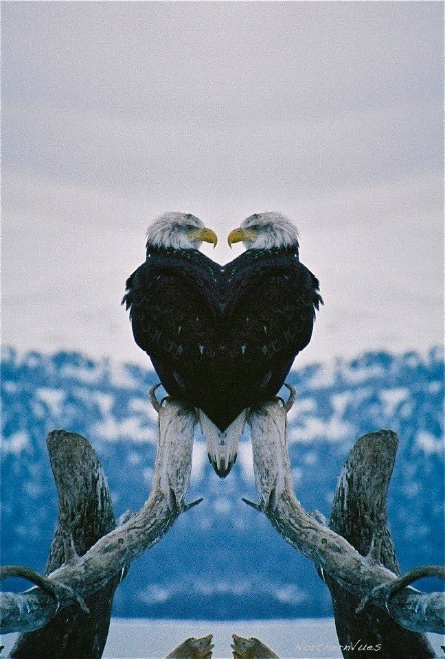 Eagle Heart | Hearts in Nature