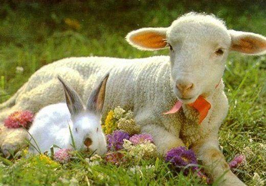 Aranyosi Ervin: Áldott, Szép Húsvéti Ünnepet Kívánok