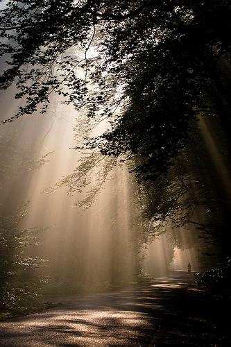 Sunshine through the trees at national park 'Hoge Veluwe'
