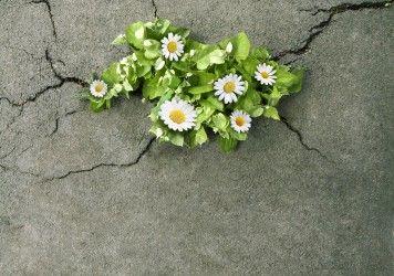 Nature through concrete - Google Search
