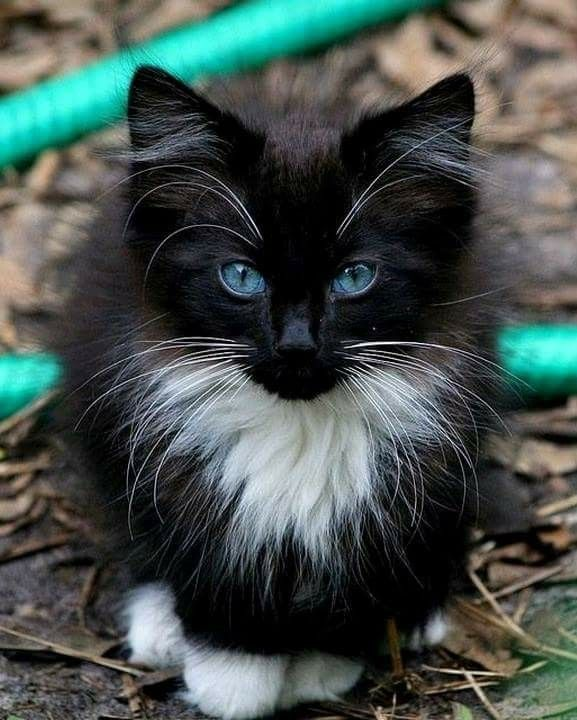 Pin By Gerald Dysert On Cats Kittens Beautiful Cats Cute Cats