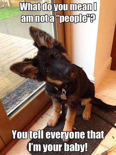 Our doggies definitely are part of our family .. They're our 'furry kids'  ❤️
