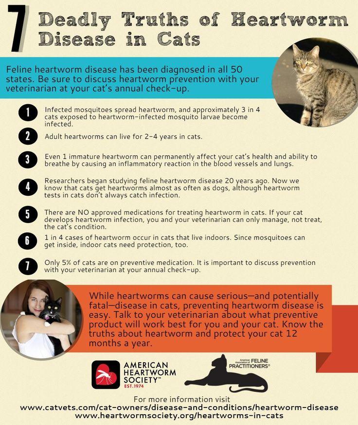 Heartworm Disease American Association of Feline