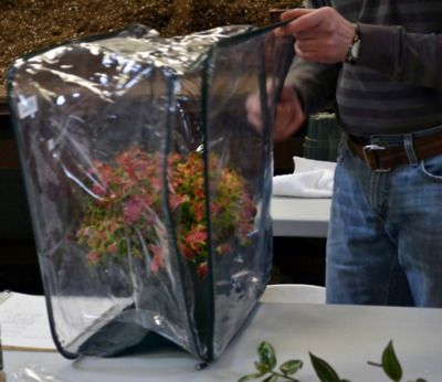 Plastic blanket bag as small, portable greenhouse. Winter herbs and salad greens, here I come. #diy #gardening