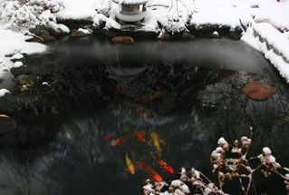 Winter care for koi ponds diy gardens ponds pinterest for Koi pond winter
