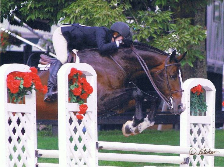 King de Coquerie want to breed a hunter derby champion?