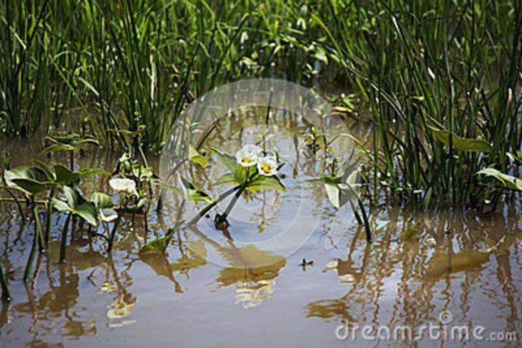 Charca Con Las Plantas - Descarga De Over 38 Millones de fotos de alta calidad e imágenes Vectores% ee%. Inscríbete GRATIS hoy. Imagen: 62349776