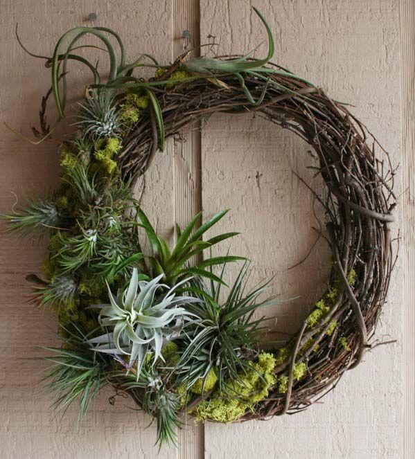 Tillandsia arrangement on grapevine wreath