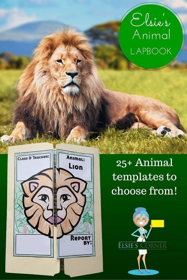 GIve your kiddos a chance to FALL IN LOVE with their favorite animal  This Animal Lapbook is the the perfect compliment or alternative to a Report of Information   The included templates will make your students want to do the RESEARCH necessary to capture