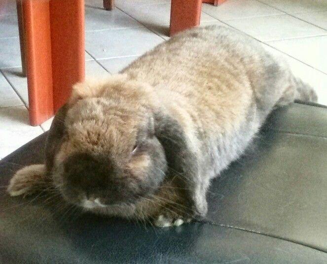 Pallina bunny