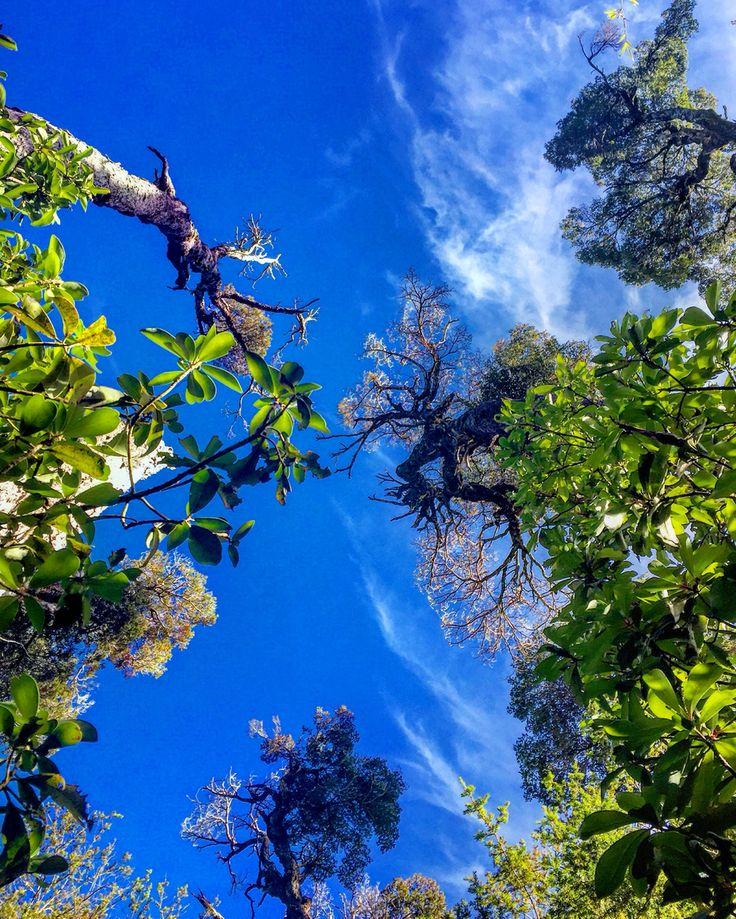 Arboles y cielo del Parque Alerce Costero.