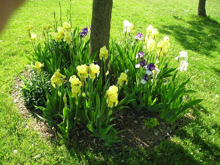 Landscaping around Trees | Landscape: Flowers in the base of trees-flowers around trees