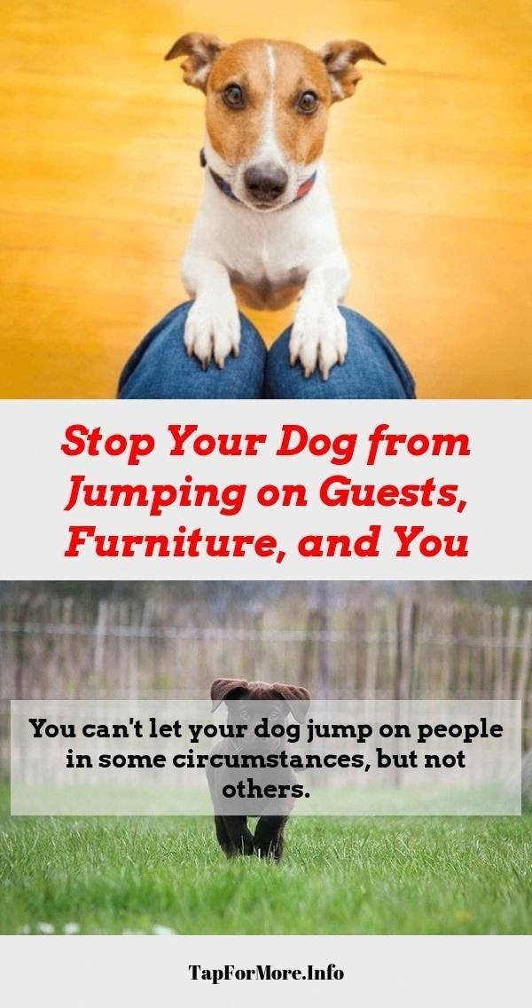Stop Dog Jumping And Dog Training Tips Recall Check The Picture