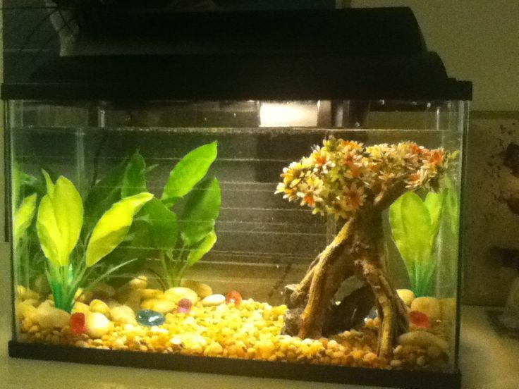 My new top fin 5 5 gallon starter kit set up for my betta for 5 gallon fish tank heater