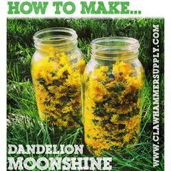Dandelion Moonshine. I think it would be easier to just ad the dandelions to already made moonshine.  ;)