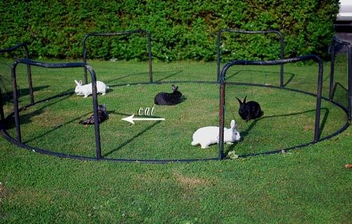 Old Trampoline Ideas   ... or a rabbit pen..... old trampoline bottom flipped upsidedown