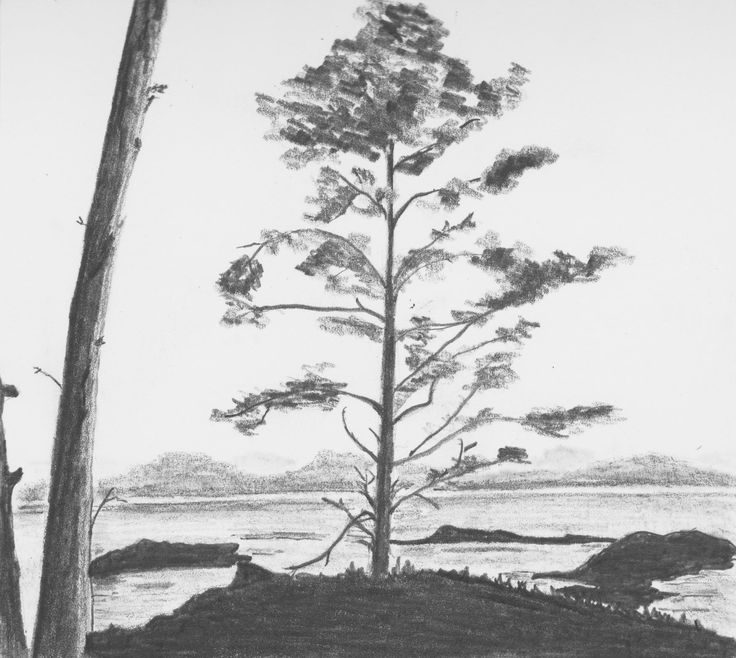 Tree on the shore by Hester Bondt
