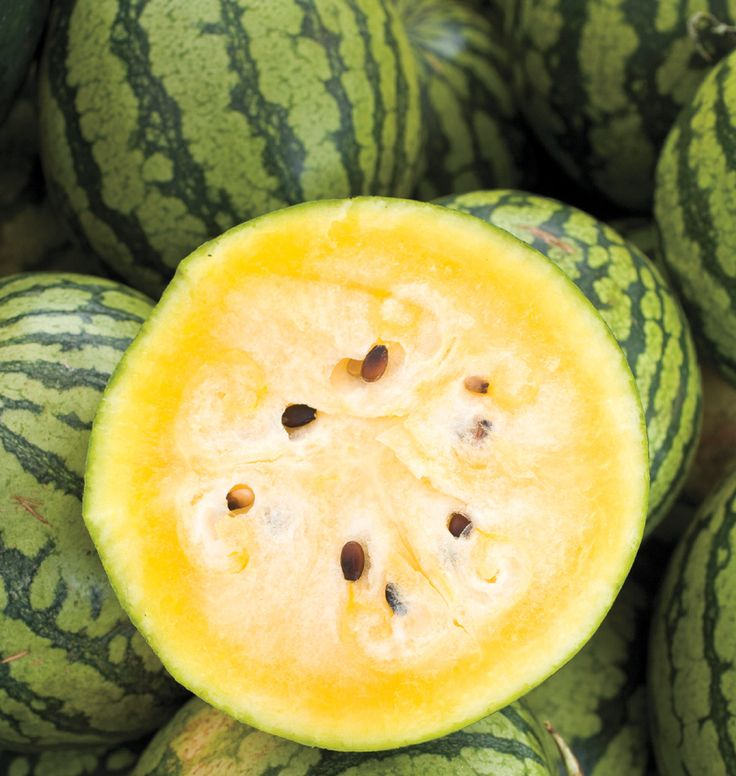 Yellow Doll Watermelon Seeds may be the best melons to grow on the West Coast. Learn when to plant watermelon seeds in our How to Grow Melons instructions.