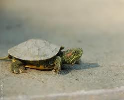 ilheus de cabo verde ''tartaruga'' #CapeVerde #TeamCapeVerdean #TeamFunana