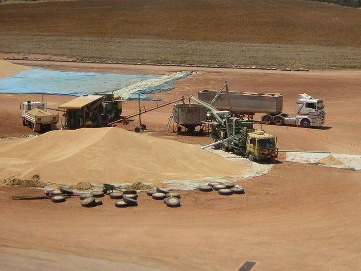 http://www.walcoseed.com.au/ - Advanced Processes of #seedCleaning in #Gladstone by walcoseed.deviantart.com on @DeviantArt
