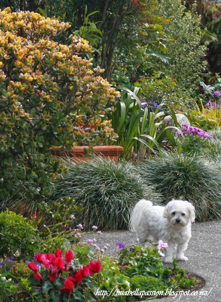 Mia Bella Passions: Garden Tour...