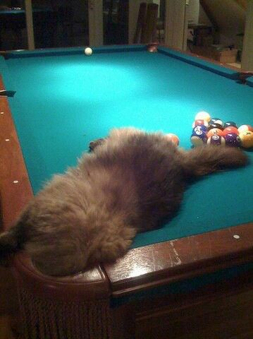 Cats Hiding In Pool Tables