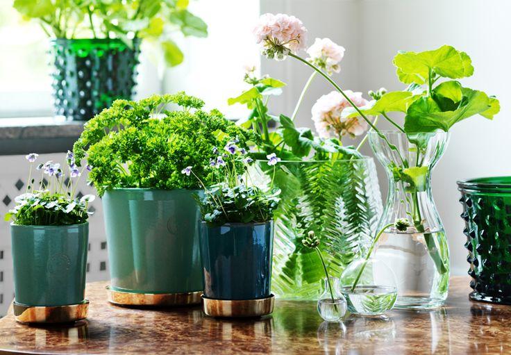 Green pots with gold plate. Botanik | Svenskt Tenn