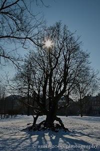 Frozen Amsterdam