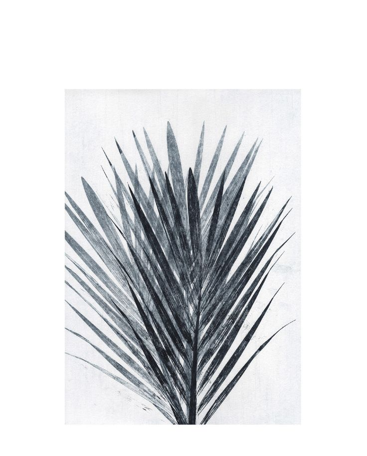 Postkarte Palm light grey
