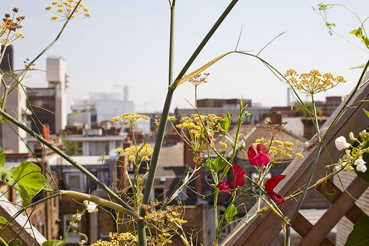 Wendy Shillam | The Garden Edit, Photography Amber Rowlands Journal entry from August, 2014