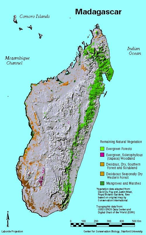 Image result for madagascar rainforest