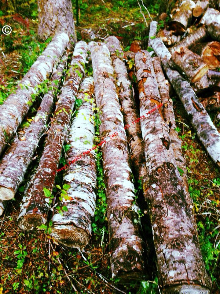 © Hough Family Photography  2013 , all rights reserved  . Got 7 logs cut for fence post