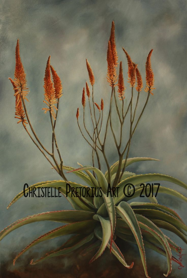 Artist: Christelle Pretorius. Beautiful composition of South African Aloes. Oil on Canvas. Subjected to copyright. For more information contact Christelle christelledv@live.com