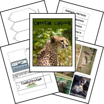 Cheetah Animal Study and Lapbook. This will be awesome after the zoo.