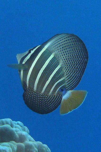 Real ocean fish - photo#27