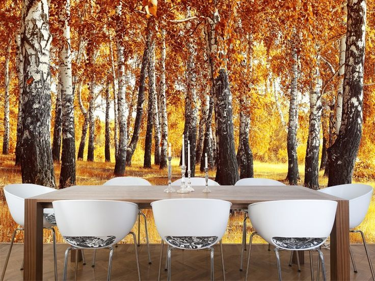 Fall leaves wall mural the colors of fall decoration for Birch tree wallpaper mural